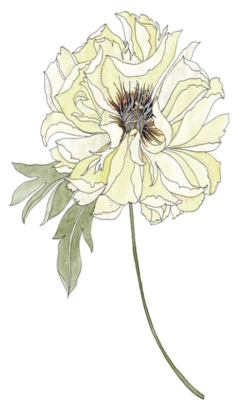 ap-extra-bloemen1