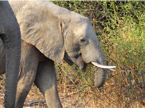 f13_wieke-ziet-een-olifant-met-een-halve-slurf_ap