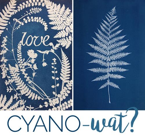 f6_willemijn_cyano-wat_hp