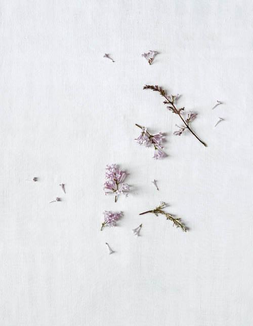 f7_flowerstories_ap3