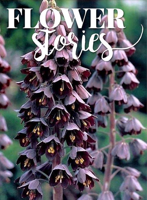 flowerstories_kl