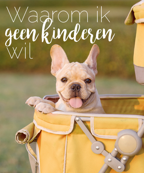 hondje in kinderwagen