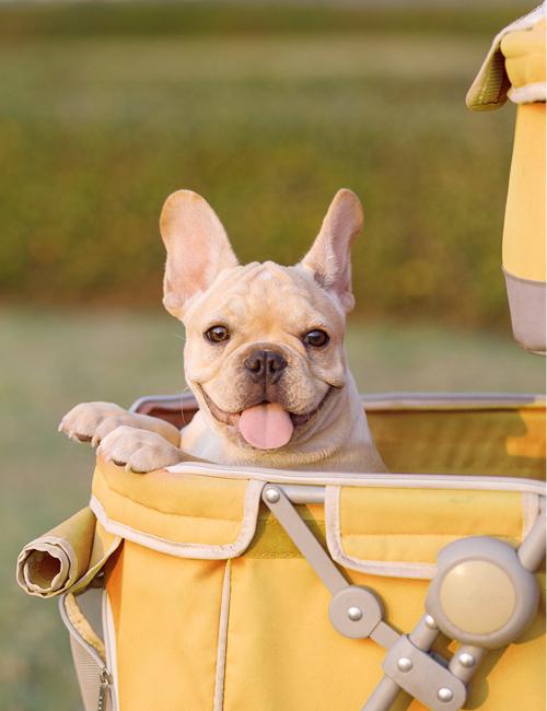 frenchie in kinderwagen