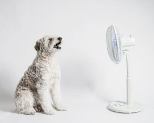 hond voor de ventilator